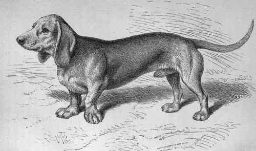 early dachshund dachshund history